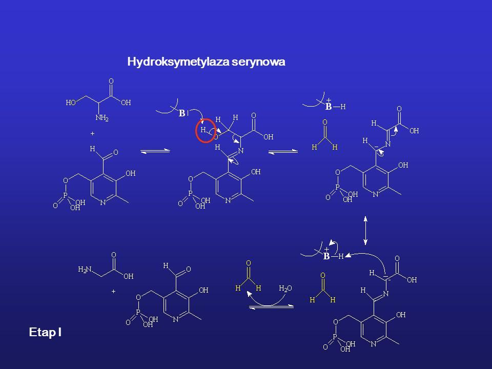 Hydroksymetylaza serynowa Etap I