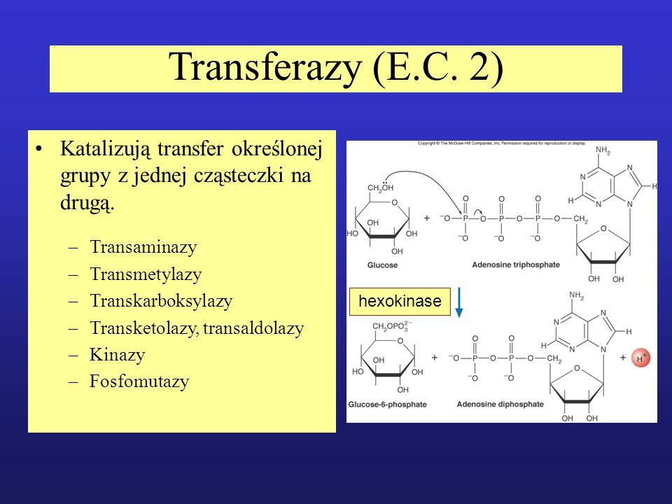Transferazy (E.C. 2) Katalizują transfer określonej grupy z jednej cząsteczki na drugą. –Transaminazy –Transmetylazy –Transkarboksylazy –Transketolazy