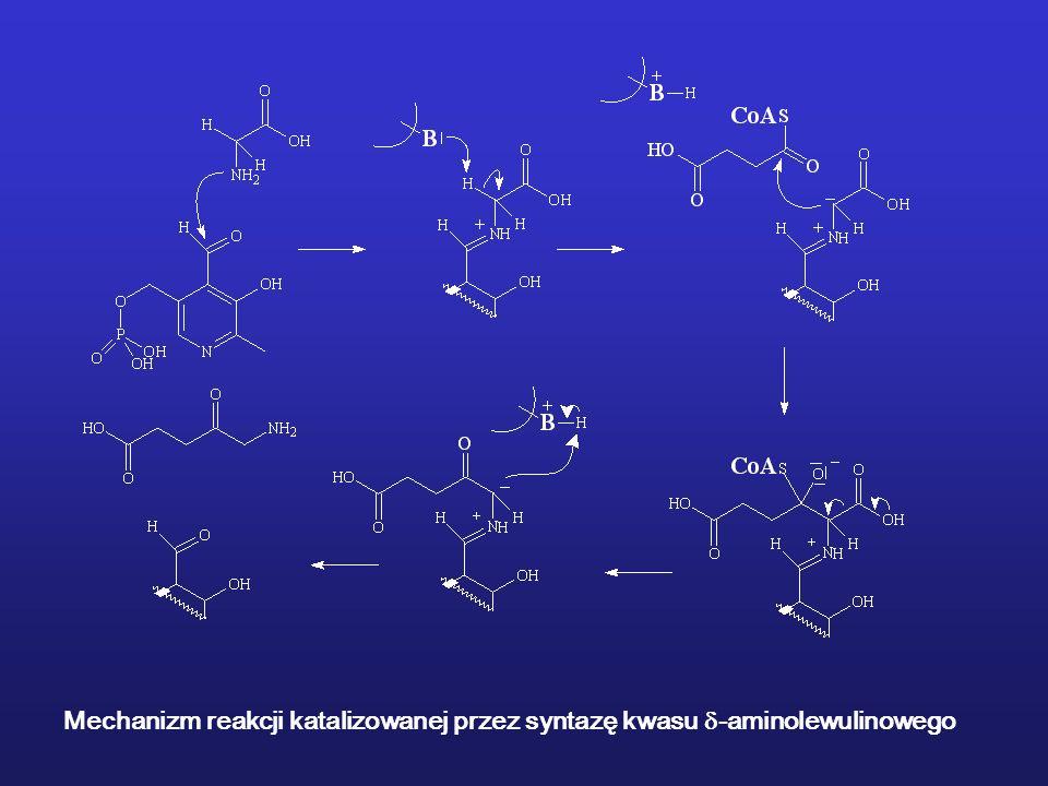 Mechanizm reakcji katalizowanej przez syntazę kwasu -aminolewulinowego