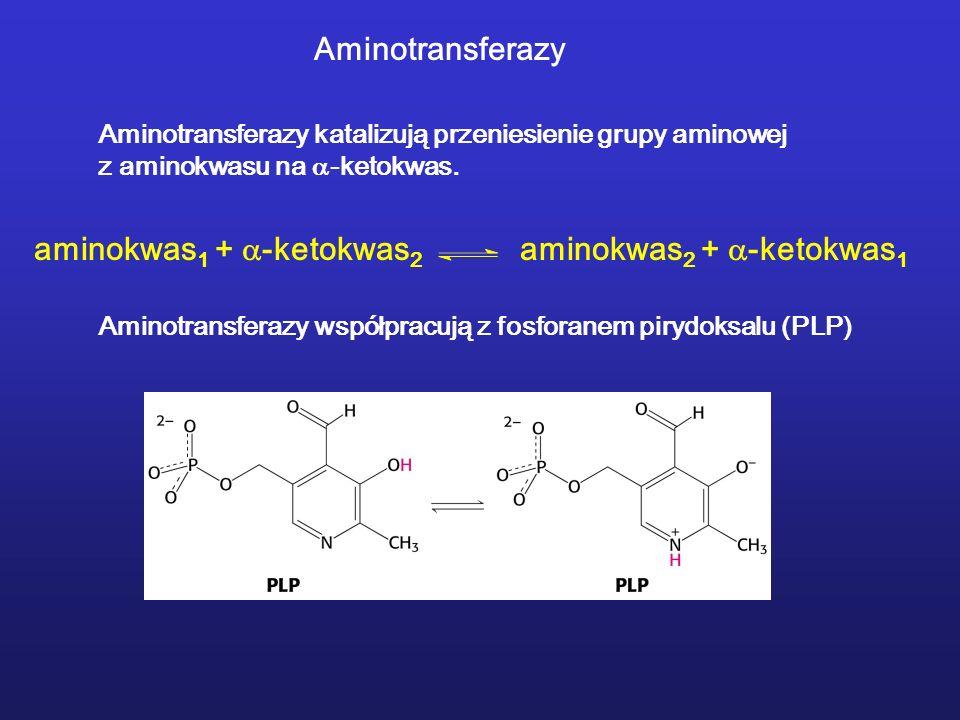 Aminotransferazy Aminotransferazy katalizują przeniesienie grupy aminowej z aminokwasu na -ketokwas. Aminotransferazy współpracują z fosforanem pirydo