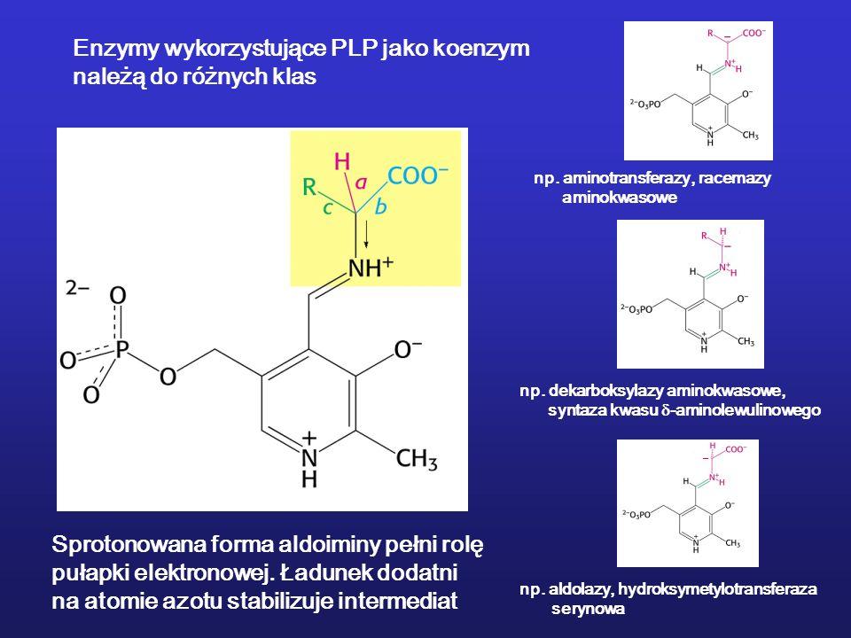 Enzymy wykorzystujące PLP jako koenzym należą do różnych klas Sprotonowana forma aldoiminy pełni rolę pułapki elektronowej. Ładunek dodatni na atomie