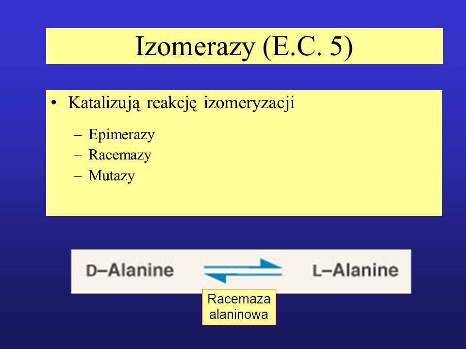 Izomerazy (E.C. 5) Katalizują reakcję izomeryzacji –Epimerazy –Racemazy –Mutazy Racemaza alaninowa