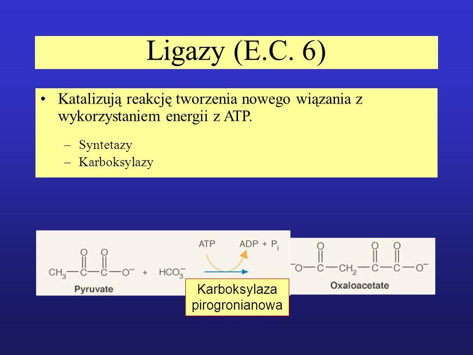 Ligazy (E.C. 6) Katalizują reakcję tworzenia nowego wiązania z wykorzystaniem energii z ATP. –Syntetazy –Karboksylazy Karboksylaza pirogronianowa