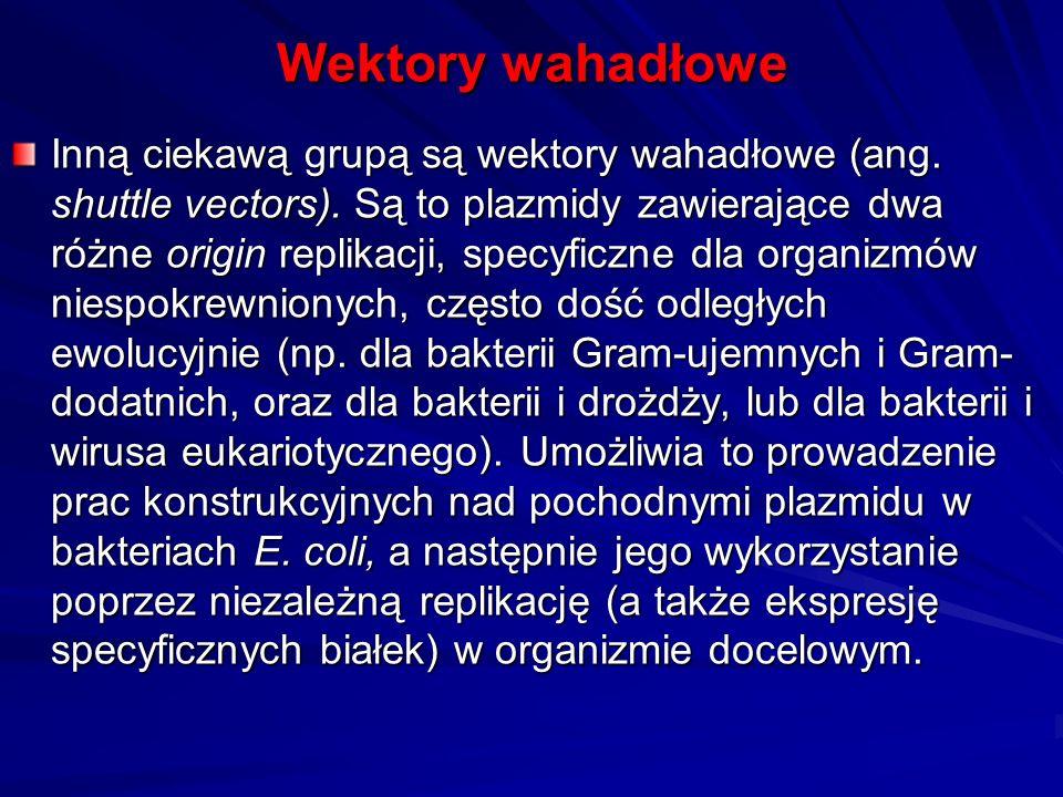 Wektory wahadłowe Inną ciekawą grupą są wektory wahadłowe (ang. shuttle vectors). Są to plazmidy zawierające dwa różne origin replikacji, specyficzne