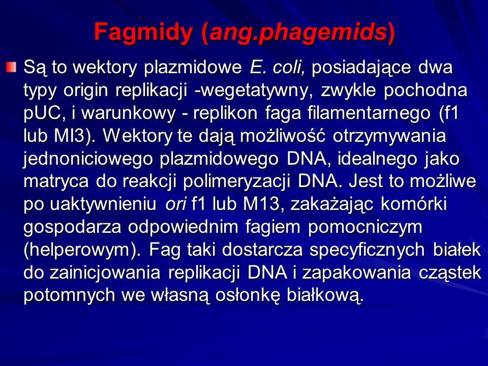 Fagmidy (ang.phagemids) Są to wektory plazmidowe E. coli, posiadające dwa typy origin replikacji -wegetatywny, zwykle pochodna pUC, i warunkowy - repl