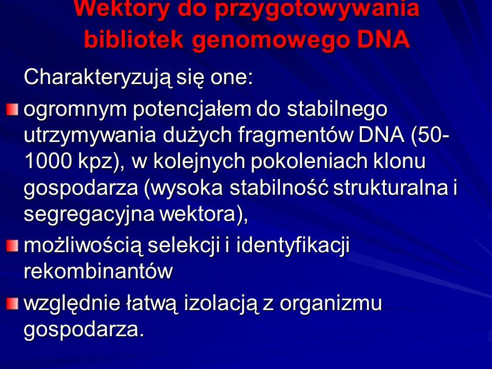 Wektory do przygotowywania bibliotek genomowego DNA Charakteryzują się one: ogromnym potencjałem do stabilnego utrzymywania dużych fragmentów DNA (50-