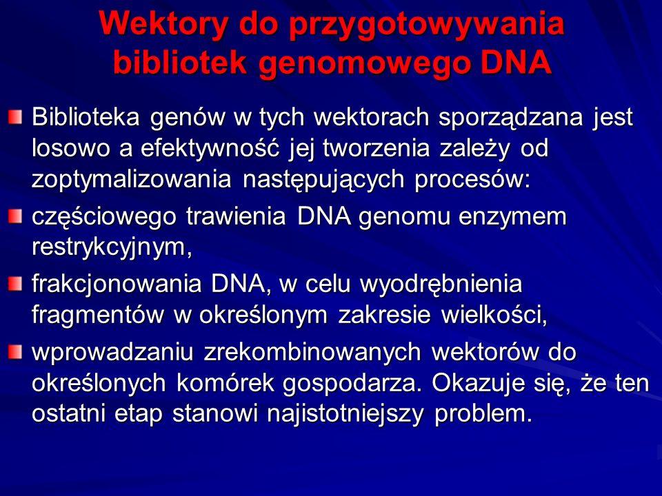 Wektory do przygotowywania bibliotek genomowego DNA Biblioteka genów w tych wektorach sporządzana jest losowo a efektywność jej tworzenia zależy od zo