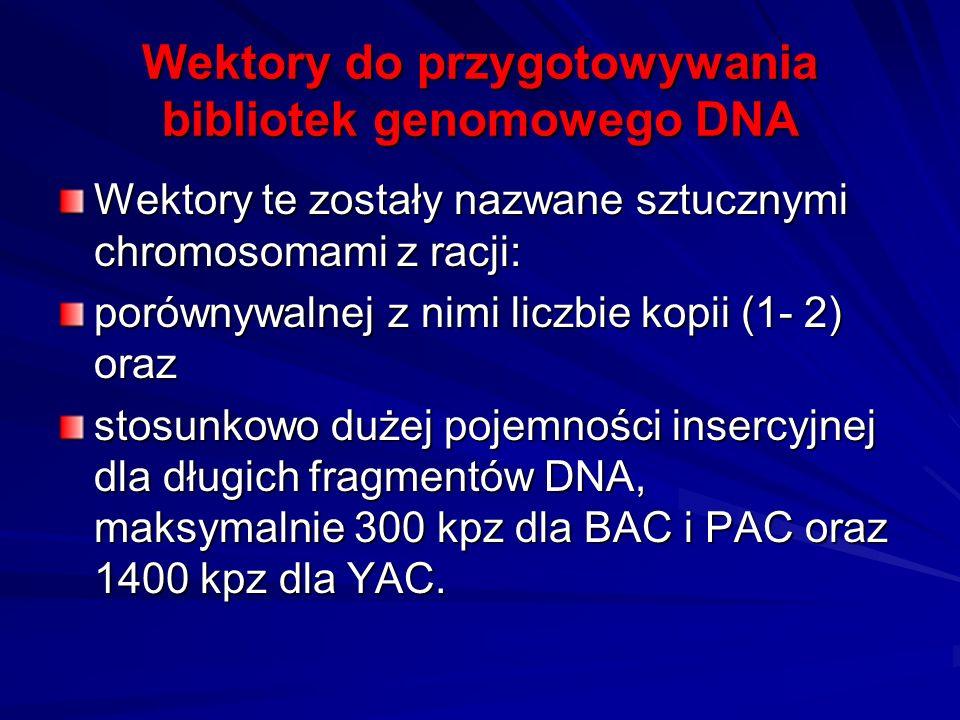 Wektory do przygotowywania bibliotek genomowego DNA Wektory te zostały nazwane sztucznymi chromosomami z racji: porównywalnej z nimi liczbie kopii (1-