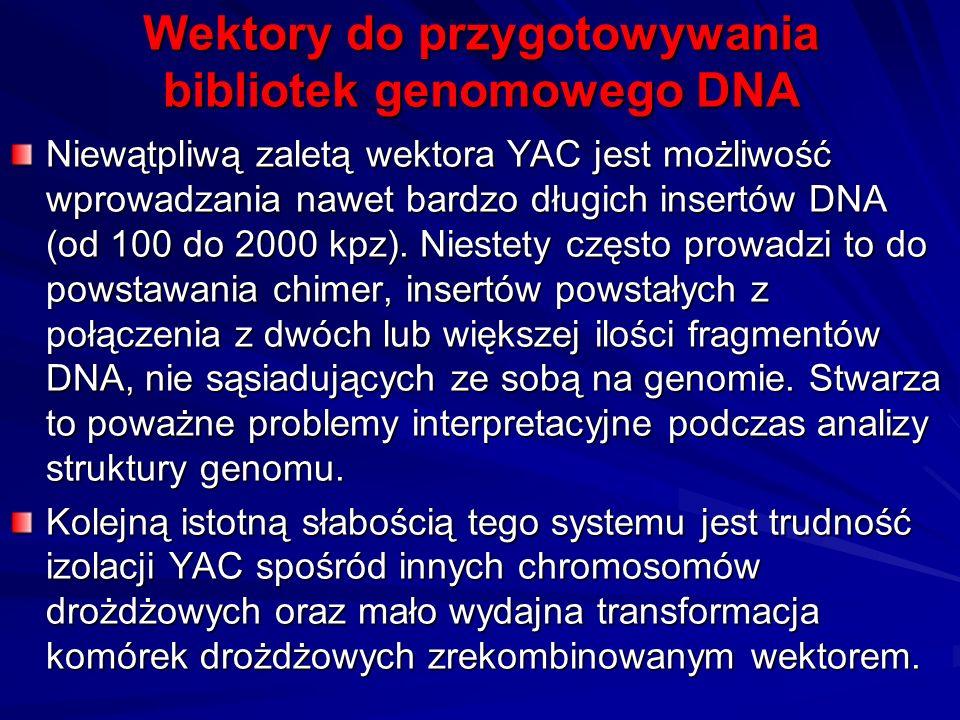 Wektory do przygotowywania bibliotek genomowego DNA Niewątpliwą zaletą wektora YAC jest możliwość wprowadzania nawet bardzo długich insertów DNA (od 1