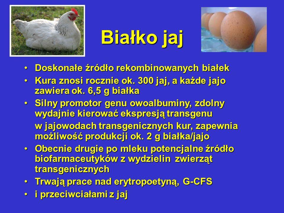 Białko jaj Doskonałe źródło rekombinowanych białekDoskonałe źródło rekombinowanych białek Kura znosi rocznie ok.