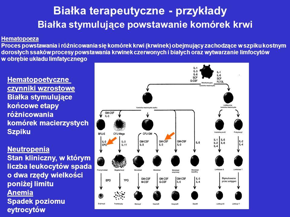Białka terapeutyczne - przykłady Białka stymulujące powstawanie komórek krwi Hematopoeza Proces powstawania i różnicowania się komórek krwi (krwinek) obejmujący zachodzące w szpiku kostnym dorosłych ssaków procesy powstawania krwinek czerwonych i białych oraz wytwarzanie limfocytów w obrębie układu limfatycznego Hematopoetyczne czynniki wzrostowe Białka stymulujące końcowe etapy różnicowania komórek macierzystych Szpiku Neutropenia Stan kliniczny, w którym liczba leukocytów spada o dwa rzędy wielkości poniżej limitu Anemia Spadek poziomu eytrocytów