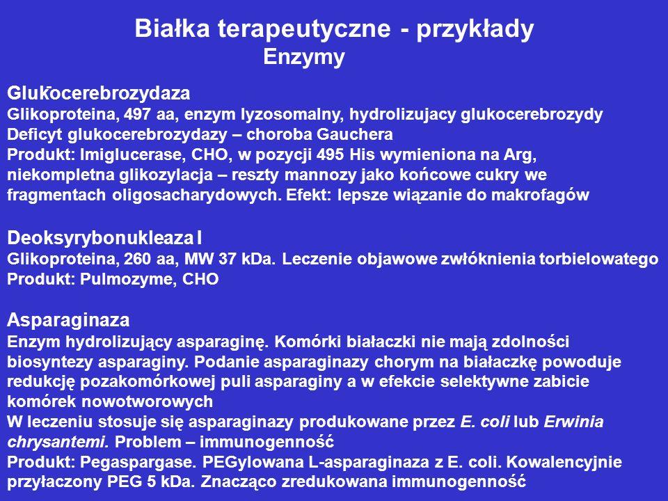 Białka terapeutyczne - przykłady Enzymy - Glukocerebrozydaza Glikoproteina, 497 aa, enzym lyzosomalny, hydrolizujacy glukocerebrozydy Deficyt glukocerebrozydazy – choroba Gauchera Produkt: Imiglucerase, CHO, w pozycji 495 His wymieniona na Arg, niekompletna glikozylacja – reszty mannozy jako końcowe cukry we fragmentach oligosacharydowych.