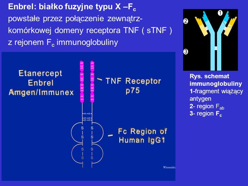 Enbrel: białko fuzyjne typu X –F c powstałe przez połączenie zewnątrz- komórkowej domeny receptora TNF ( sTNF ) z rejonem F c immunoglobuliny Rys. sch