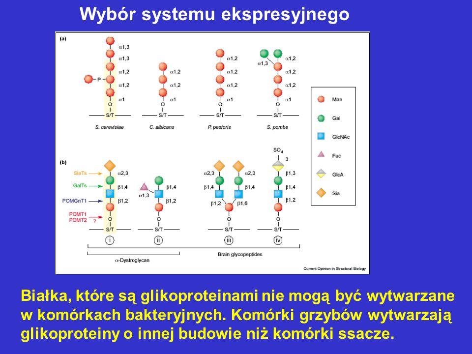 Białka, które są glikoproteinami nie mogą być wytwarzane w komórkach bakteryjnych. Komórki grzybów wytwarzają glikoproteiny o innej budowie niż komórk