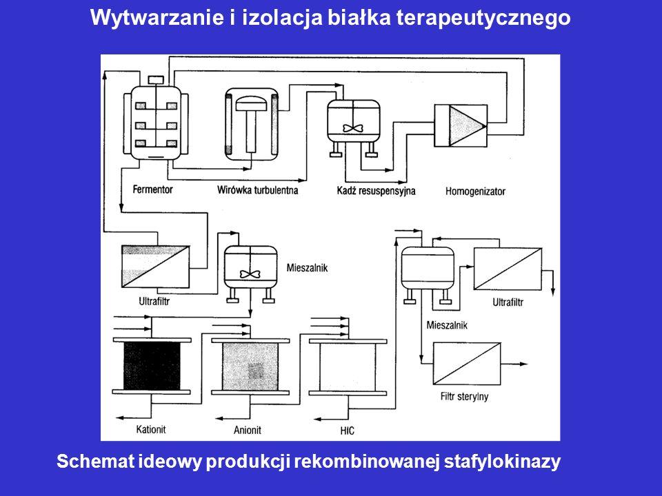 Schemat ideowy produkcji rekombinowanej stafylokinazy Wytwarzanie i izolacja białka terapeutycznego
