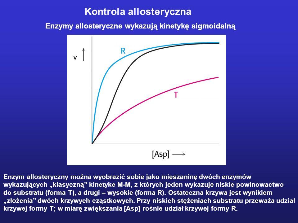 Enzymy allosteryczne wykazują kinetykę sigmoidalną Enzym allosteryczny można wyobrazić sobie jako mieszaninę dwóch enzymów wykazujących klasyczną kine