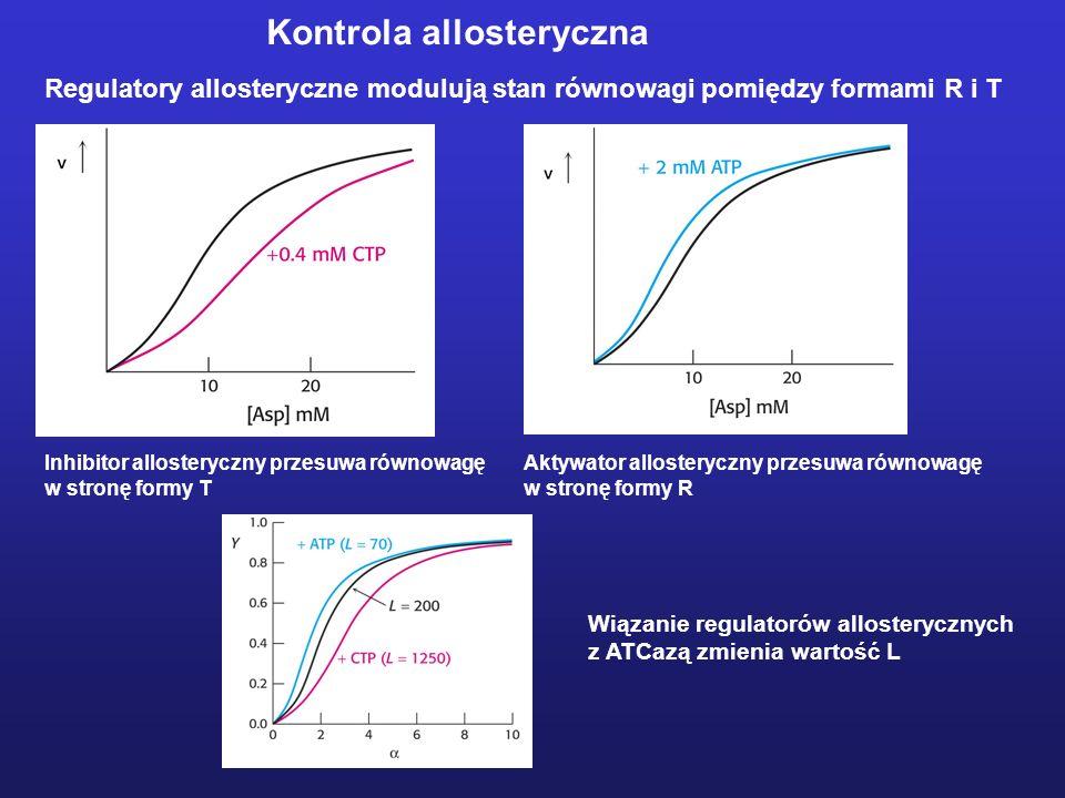 Kontrola allosteryczna Regulatory allosteryczne modulują stan równowagi pomiędzy formami R i T Inhibitor allosteryczny przesuwa równowagę w stronę for