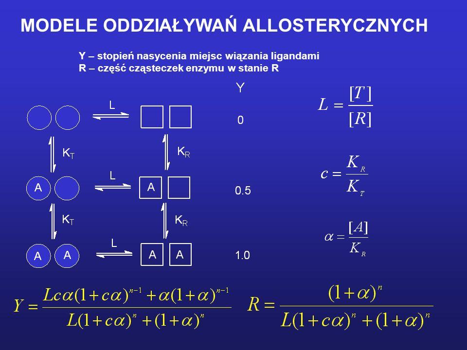 Y – stopień nasycenia miejsc wiązania ligandami R – część cząsteczek enzymu w stanie R MODELE ODDZIAŁYWAŃ ALLOSTERYCZNYCH