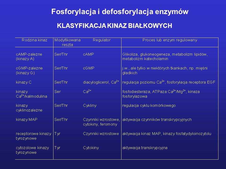 KLASYFIKACJA KINAZ BIAŁKOWYCH Fosforylacja i defosforylacja enzymów