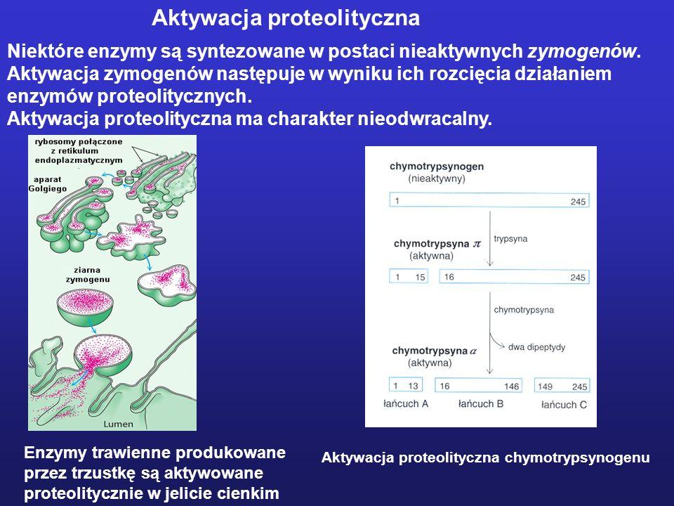 Niektóre enzymy są syntezowane w postaci nieaktywnych zymogenów. Aktywacja zymogenów następuje w wyniku ich rozcięcia działaniem enzymów proteolityczn