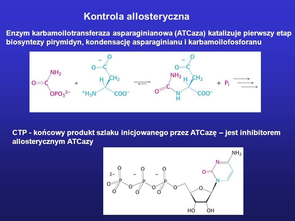 Kontrola allosteryczna Enzym karbamoilotransferaza asparaginianowa (ATCaza) katalizuje pierwszy etap biosyntezy pirymidyn, kondensację asparaginianu i