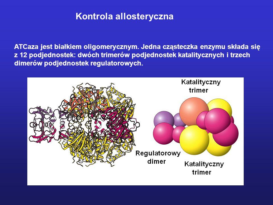 ATCaza jest białkiem oligomerycznym. Jedna cząsteczka enzymu składa się z 12 podjednostek: dwóch trimerów podjednostek katalitycznych i trzech dimerów