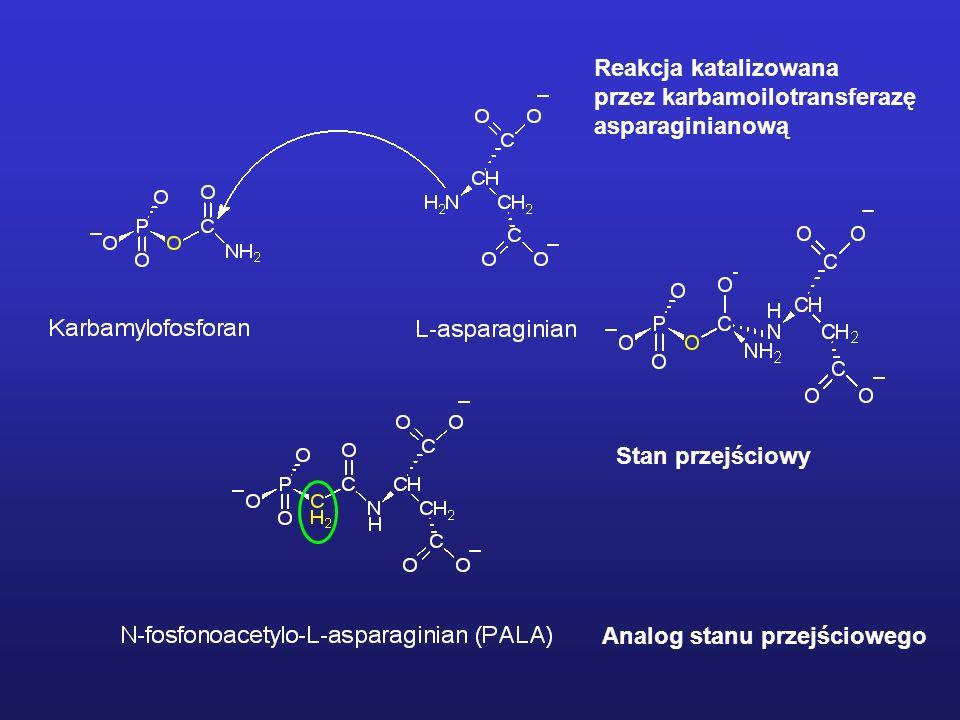 Reakcja katalizowana przez karbamoilotransferazę asparaginianową Analog stanu przejściowego Stan przejściowy