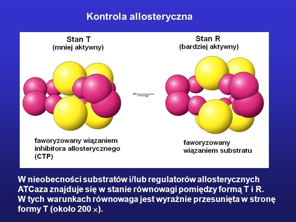 W nieobecności substratów i/lub regulatorów allosterycznych ATCaza znajduje się w stanie równowagi pomiędzy formą T i R. W tych warunkach równowaga je