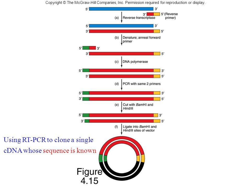 Using RT-PCR in cDNA Cloning