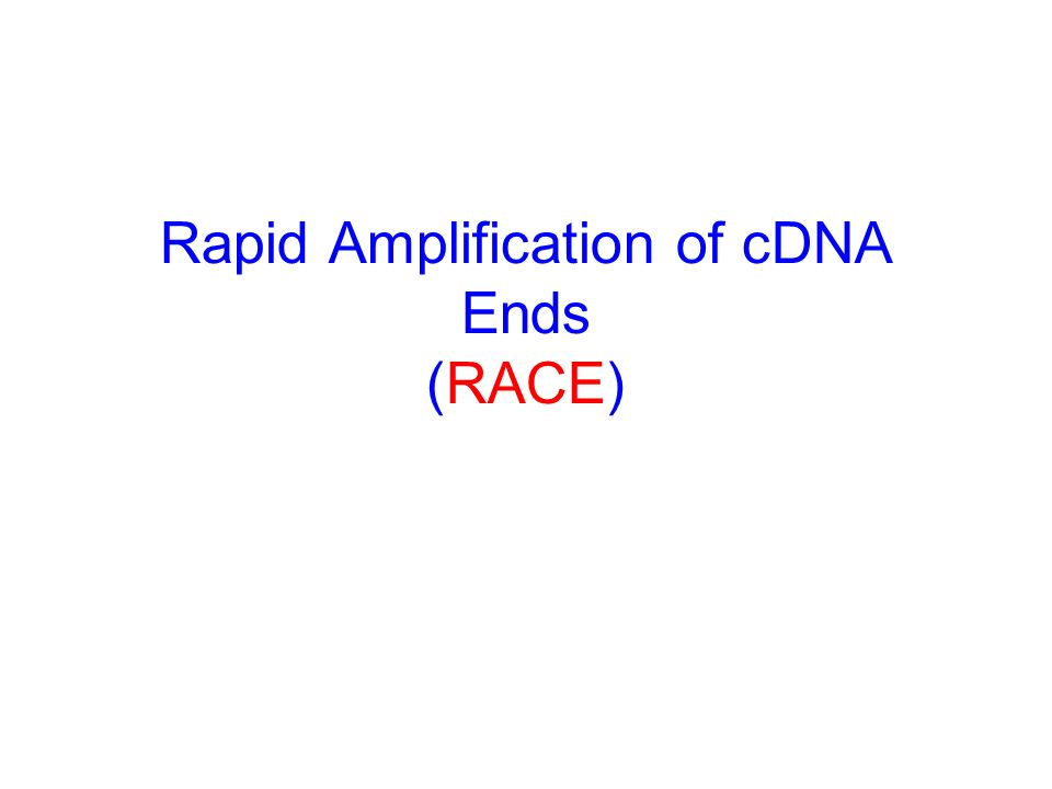 What kind of vector should be used to ligate a cDNA ? A plasmid or phagemid vector such as pUC or pBS can be used; if so, positive clones are usually