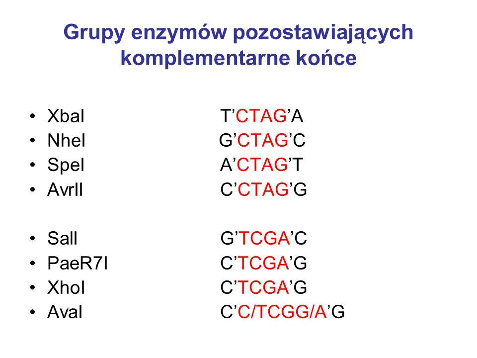 Grupy enzymów pozostawiających komplementarne końce Najpopularniejsze pary enzymów pozostawiających komplementarne końce to: BamHI GGATCC BglII AGATCT