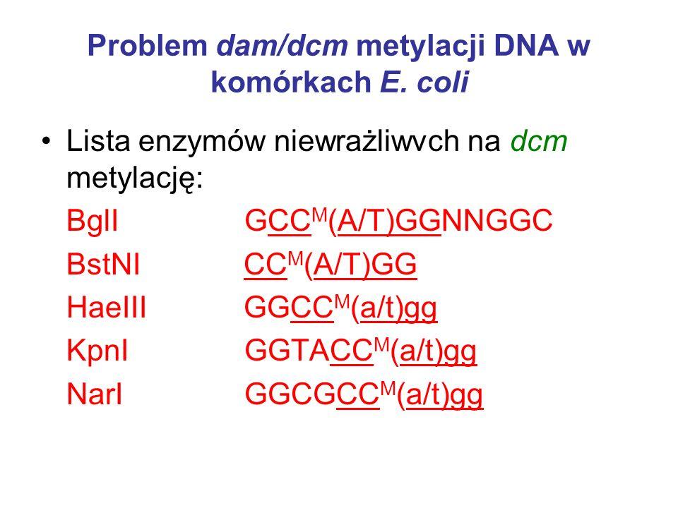 Problem dam/dcm metylacji DNA w komórkach E. coli Lista enzymów dcm zależnych - wrażliwych (sekwencje dcm podkreślono): AvaII GG(A/T)CC M (a/t)gg BalI