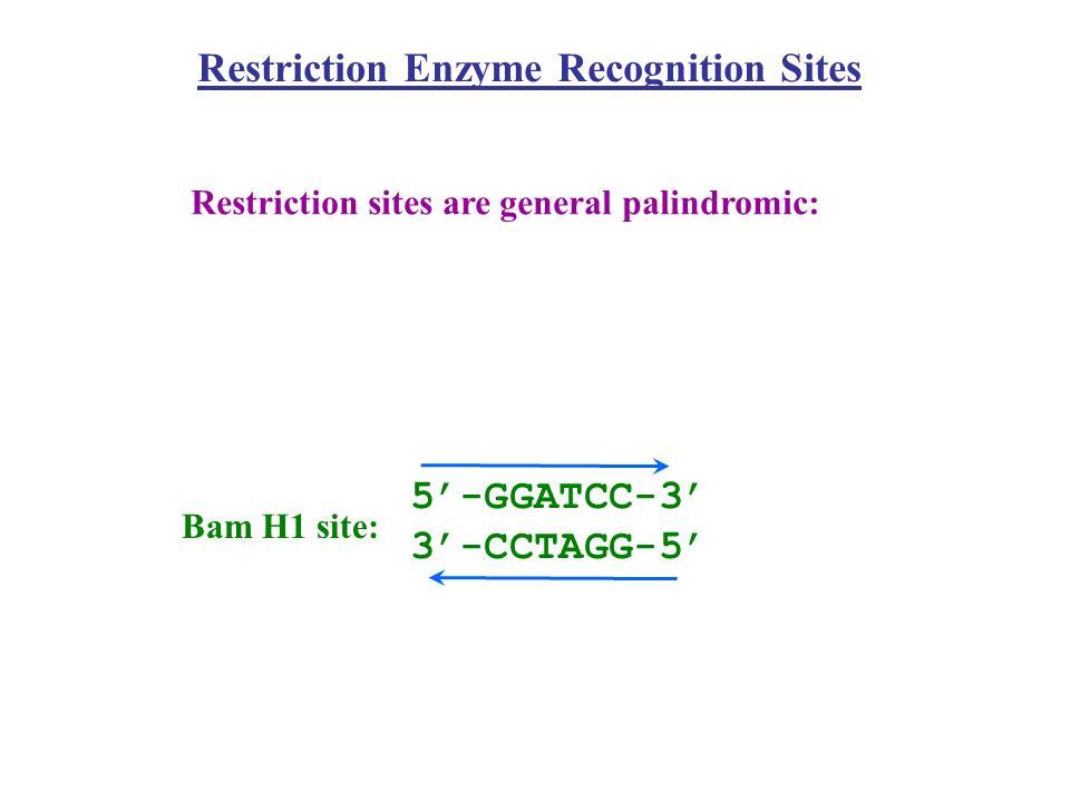 Klasy typu II RM II S (monomery w roztworze; rozpoznają asymetryczną sekwencję; cięcie w zdefiniowanej odległości od sekwencji rozpoznawanej, 1-20 pz; np.
