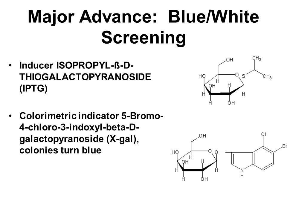 Major Advance: Blue/White Screening When insert DNA in cloned into the polylinker separating the start codon and the alpha peptide sequence in the vec