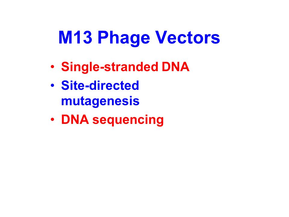 Cos (cohesive ends), mids=plasmid Accommodate 40-50 kb Recombinant cosmids are packaged into phage particles. These, cannot replicate as phages but th