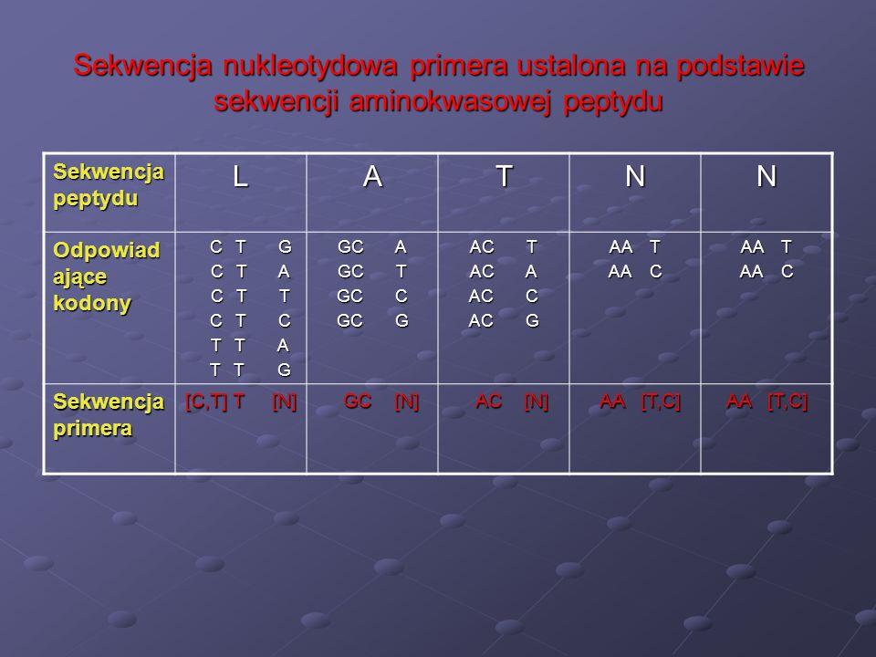 Sekwencja nukleotydowa primera ustalona na podstawie sekwencji aminokwasowej peptydu Sekwencja peptydu LATNN Odpowiad ające kodony C T G C T G C T A C