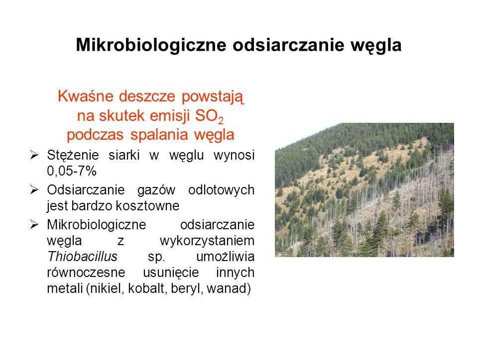 Mikrobiologiczne odsiarczanie węgla Kwaśne deszcze powstają na skutek emisji SO 2 podczas spalania węgla Stężenie siarki w węglu wynosi 0,05-7% Odsiar