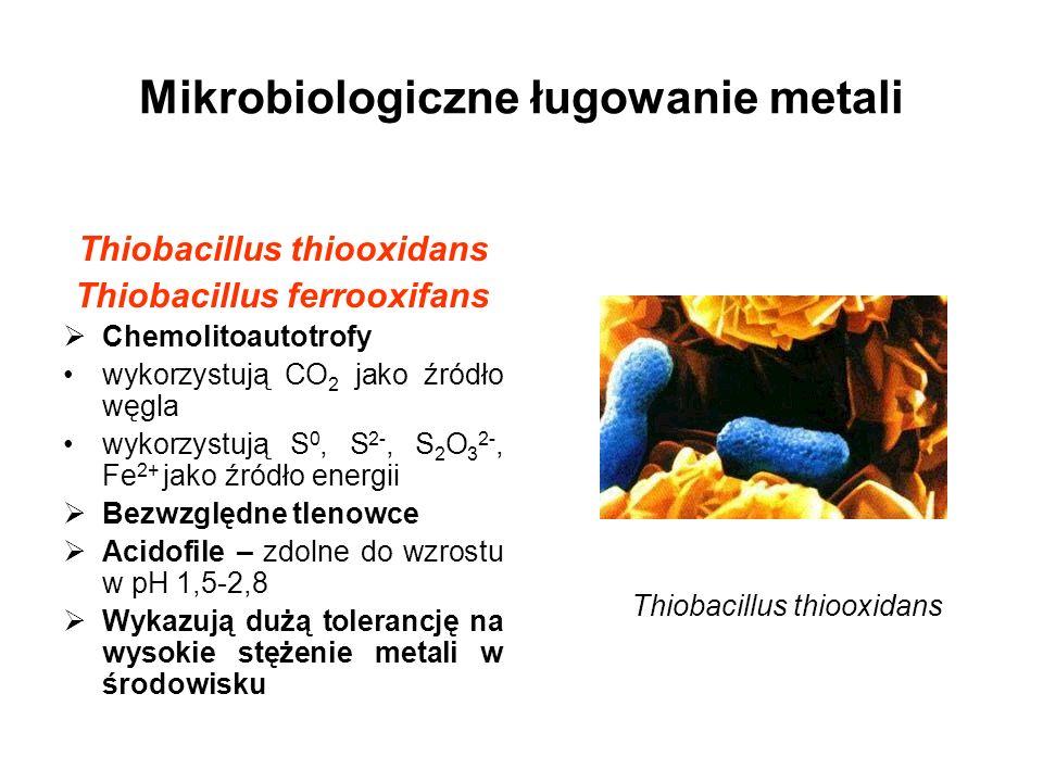 Mikrobiologiczne ługowanie metali Thiobacillus thiooxidans Thiobacillus ferrooxifans Chemolitoautotrofy wykorzystują CO 2 jako źródło węgla wykorzystu