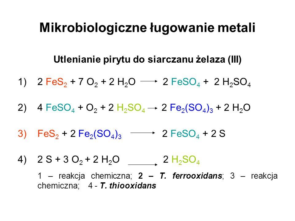 Mikrobiologiczne ługowanie metali Utlenianie pirytu do siarczanu żelaza (III) 1)2 FeS 2 + 7 O 2 + 2 H 2 O 2 FeSO 4 + 2 H 2 SO 4 2)4 FeSO 4 + O 2 + 2 H