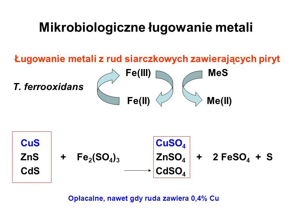 Mikrobiologiczne ługowanie metali Ługowanie metali z rud siarczkowych zawierających piryt Fe(III) MeS T. ferrooxidans Fe(II) Me(II) CuS CuSO 4 ZnS + F