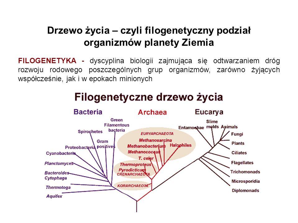 Drzewo życia – czyli filogenetyczny podział organizmów planety Ziemia FILOGENETYKA - dyscyplina biologii zajmująca się odtwarzaniem dróg rozwoju rodow