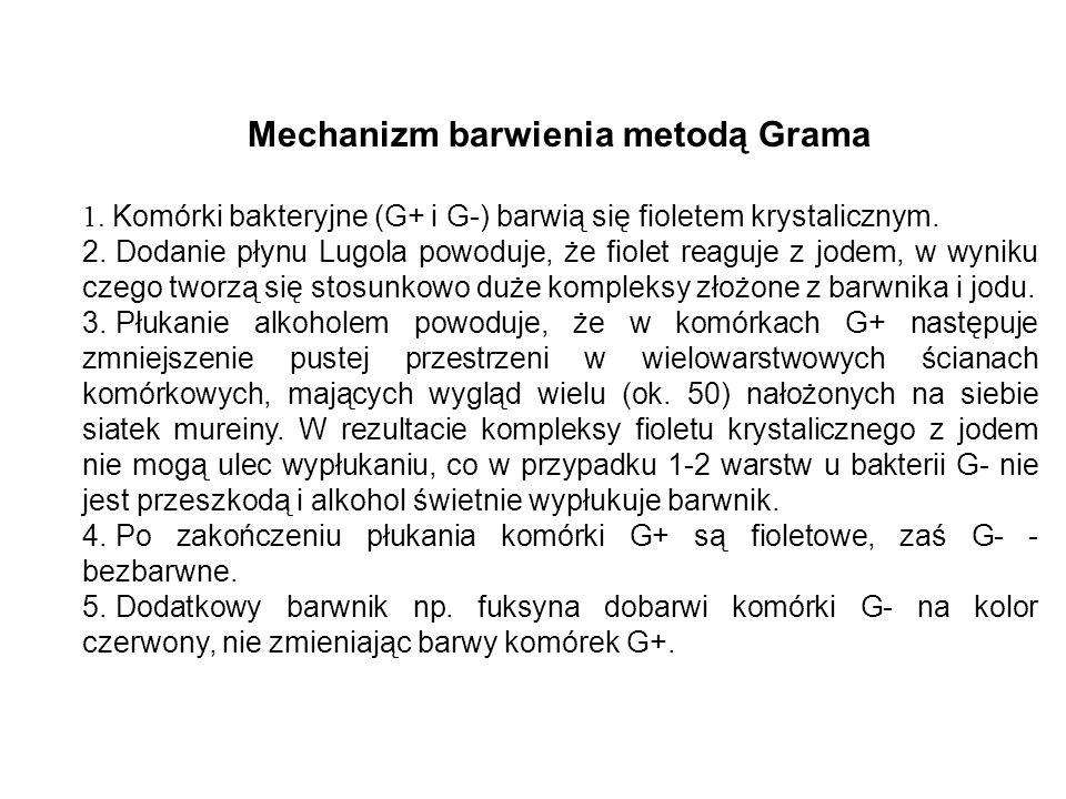 Mechanizm barwienia metodą Grama 1. Komórki bakteryjne (G+ i G-) barwią się fioletem krystalicznym. 2. Dodanie płynu Lugola powoduje, że fiolet reaguj