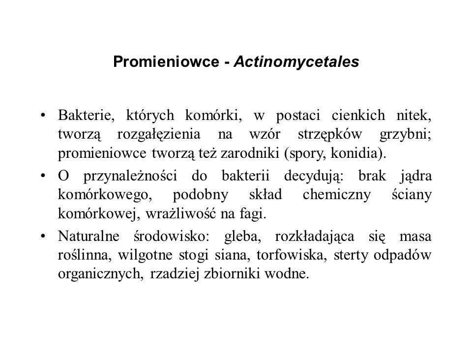 Promieniowce - Actinomycetales Bakterie, których komórki, w postaci cienkich nitek, tworzą rozgałęzienia na wzór strzępków grzybni; promieniowce tworz
