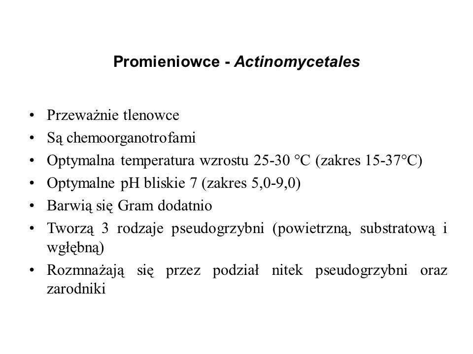 Promieniowce - Actinomycetales Przeważnie tlenowce Są chemoorganotrofami Optymalna temperatura wzrostu 25-30 °C (zakres 15-37°C) Optymalne pH bliskie