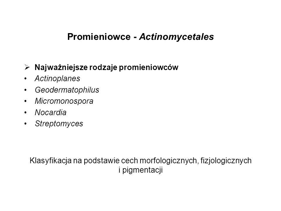 Promieniowce - Actinomycetales Najważniejsze rodzaje promieniowców Actinoplanes Geodermatophilus Micromonospora Nocardia Streptomyces Klasyfikacja na