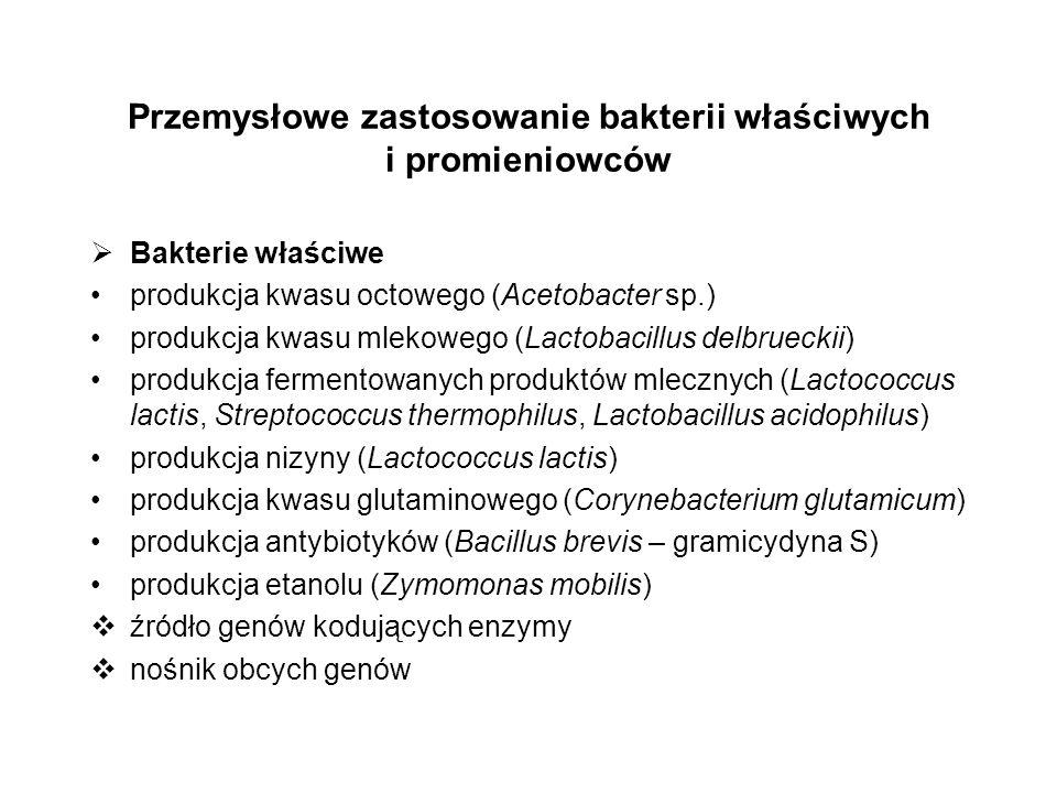 Przemysłowe zastosowanie bakterii właściwych i promieniowców Bakterie właściwe produkcja kwasu octowego (Acetobacter sp.) produkcja kwasu mlekowego (L