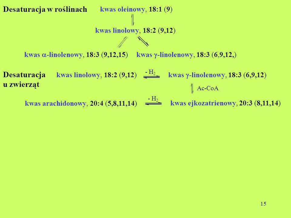 15 Desaturacja w roślinach kwas oleinowy, 18:1 (9) kwas linolowy, 18:2 (9,12) kwas -linolenowy, 18:3 (9,12,15)kwas -linolenowy, 18:3 (6,9,12,) Desatur