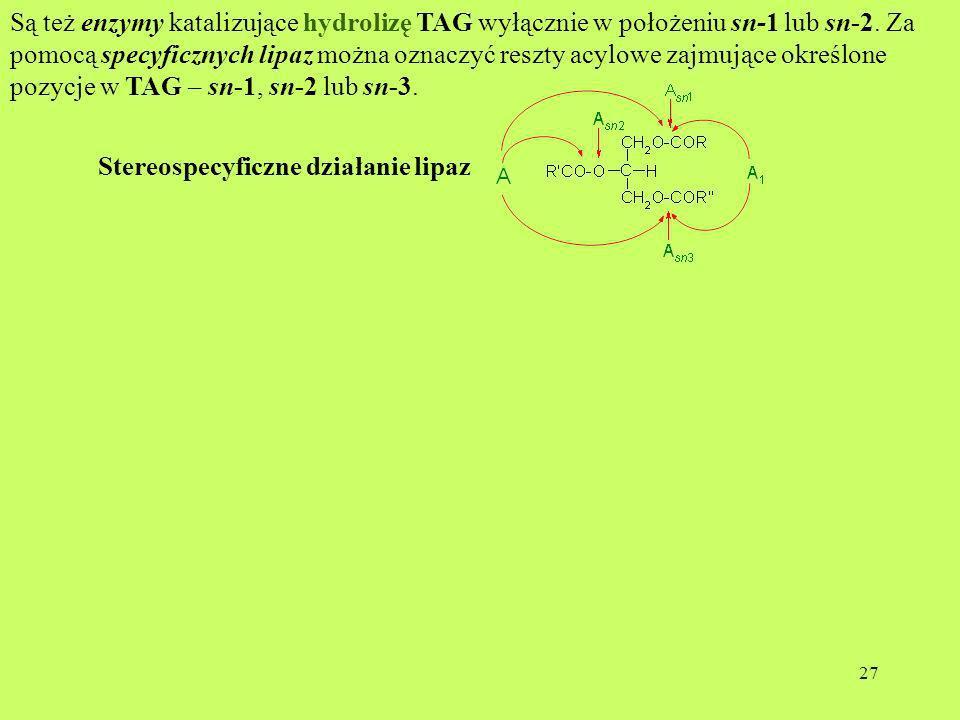 27 Są też enzymy katalizujące hydrolizę TAG wyłącznie w położeniu sn-1 lub sn-2. Za pomocą specyficznych lipaz można oznaczyć reszty acylowe zajmujące