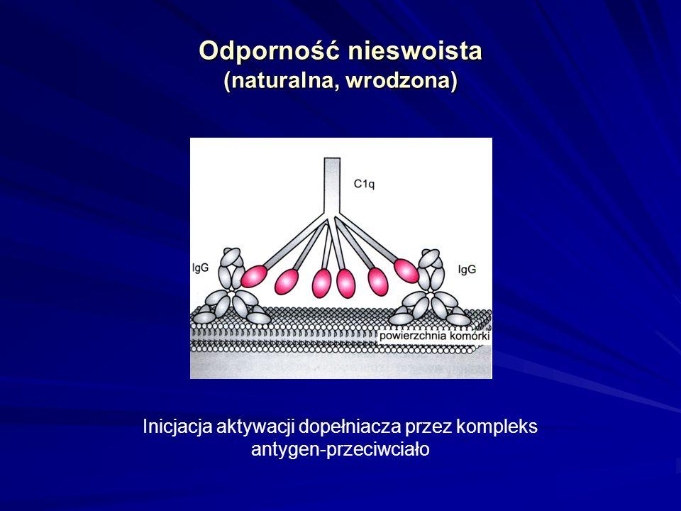 Odporność nieswoista (naturalna, wrodzona) Inicjacja aktywacji dopełniacza przez kompleks antygen-przeciwciało