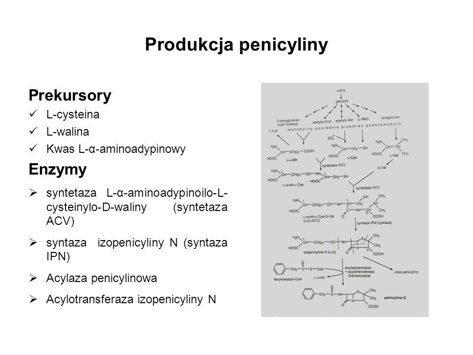 Produkcja penicyliny Prekursory L-cysteina L-walina Kwas L-α-aminoadypinowy Enzymy syntetaza L-α-aminoadypinoilo-L- cysteinylo-D-waliny (syntetaza ACV